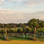 The Vineyard at Florence – Florence, TX